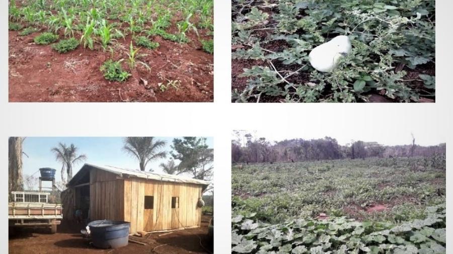 Plantações e casa de trabalhadores sem-terra na fazenda Araúna, em Novo Mundo (MT) - Reprodução