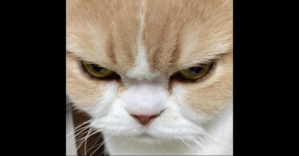 """19.fev.2015 - Essa gatinha da raça scottish fold de nove anos tem ganhado destaque nas redes sociais por seu jeitinho nada convencional. Ela é carrancuda, mas tem um charme todo especial. Não à toa conquistou mais 31,5 mil seguidores na sua página no Instagram (@marugaodesuyo), que deixa claro: """"ela não está chateada e nem é uma gata mal-humorado"""""""