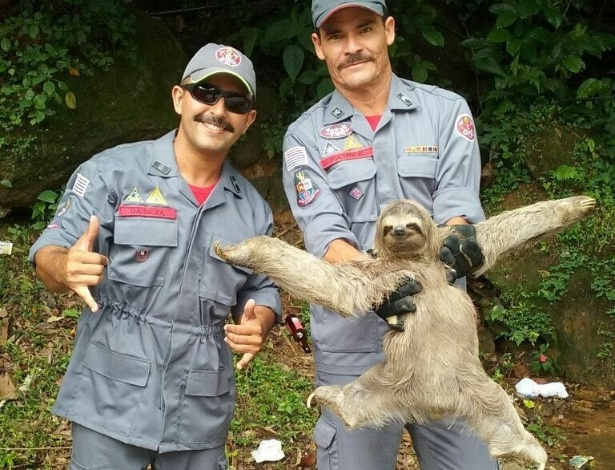Bicho-preguiça fez sua melhor pose de diva após ser resgatado de dentro de uma pousada em São Sebastião