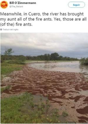 """Não é lama, mas sim milhares de formigas. A imagem foi compartilhada por Bill O""""Zimmermann via Twitter  - @The_Reliant/Twitter"""