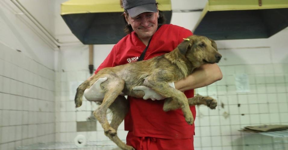 A ONG americana Clean Futures Fund desenvolve um projeto para cuidar dos cães abandonados dentro da zona de exclusão de Chernobyl. A ideia é vacinar, castrar e prestar cuidados médicos aos cachorros que vivem na área contaminada. O objetivo, no futuro, é convencer o governo ucraniano de que eles são seguros para adoção