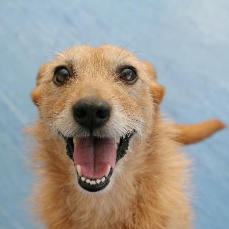 Você resiste a esse sorriso? - Getty Images/iStockphoto