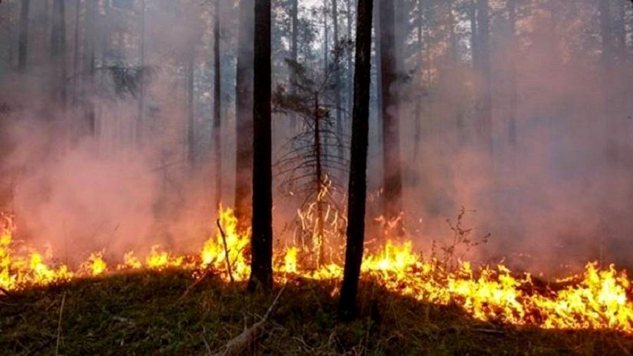 Segundo o Greenpeace, 19 milhões de hectares já foram incendiados entre janeiro e meados de julho deste ano na Sibéria  - Getty Images
