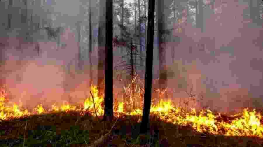 Incêndios florestais atingem a taiga, vegetação predominante na Sibéria - Getty Images