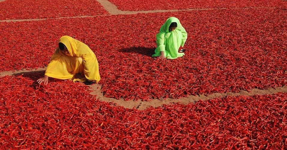 12.fev.2016 - Mulheres viram as pimentas que estão secando em Jodhpur, na Índia. As pimentas vermelhas são colhidas e espalhadas para secar, então podem ser moídas até virar o pó que dá um toque especial a vários pratos indianos