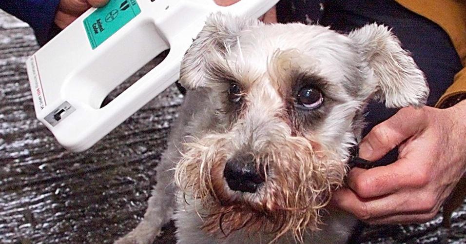 Técnico do Eurotúnel checa dados de cão francês. Os cães podem entrar no Reino Unido sem quarentena, desde que tenham um chip subcutâneo com dados de sua saúde