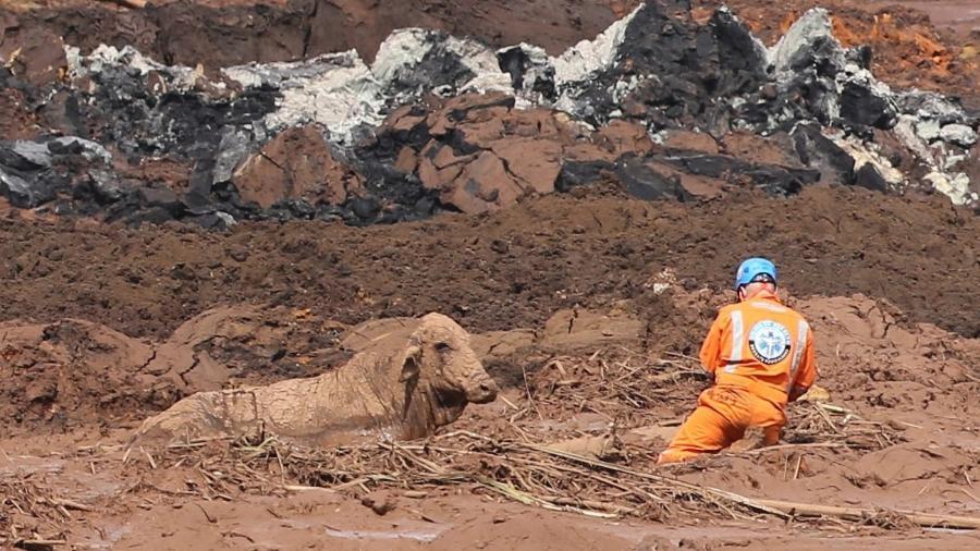 27.jan.2019 - Homens tentam salvar uma vaca atolada na lama em Brumadinho - WILTON JUNIOR/ESTADÃO CONTEÚDO