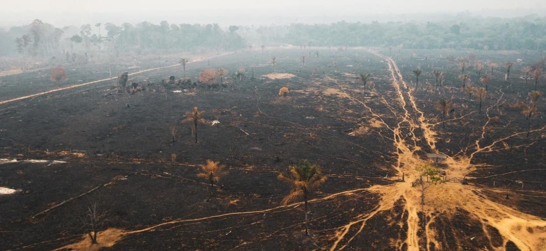 Queimadas em Rondônia, dentro da Floresta Amazônica, registrada pelo Greenpeace - Fernanda Ligabue/Greenpeace - 25.ago.2019