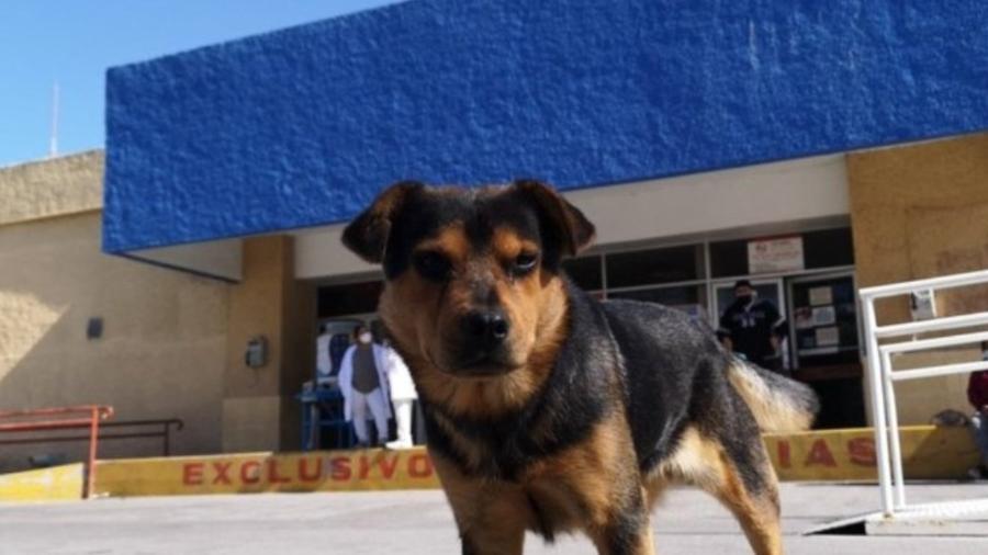 O cãozinho Covito espera por seu dono no México - Reprodução/Facebook