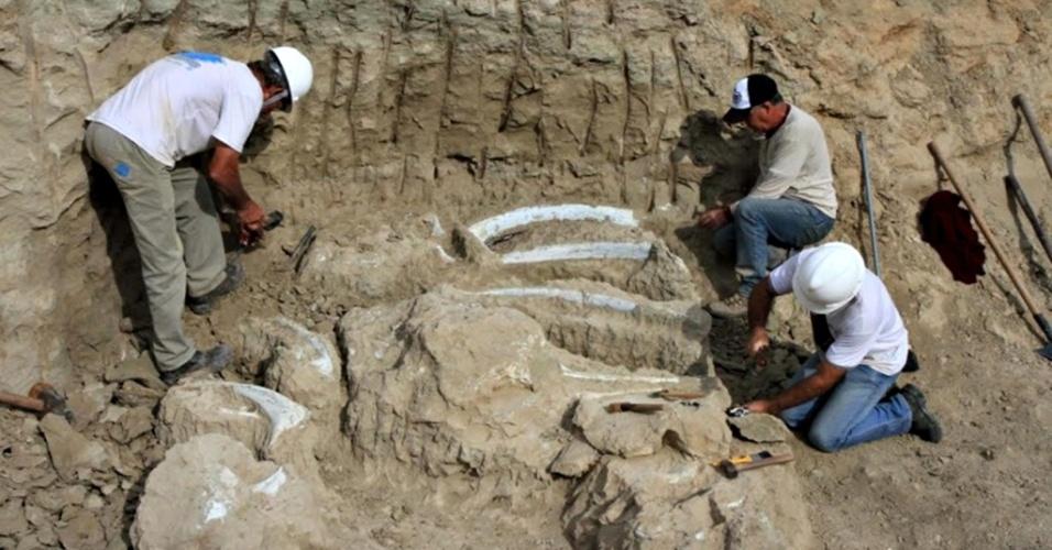 2.jul.2015 - FÓSSEIS EM UBERABA - Pesquisadores do CCCP (Complexo Cultural e Científico de Peirópolis), pertencente à UFTM (Universidade Federal do Triângulo Mineiro), encontraram fósseis de dinossauros em canteiro de obras em Uberaba (MG). Amostras foram apresentadas nesta quinta-feira (2). Dentre elas, estão costelas, vértebras, tíbias e fósseis da cintura escapular de dinossauros, todas ainda inseridas nas rochas originais localizadas em Uberaba