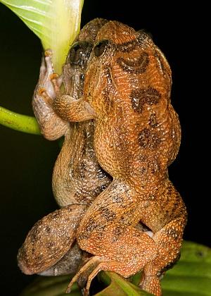 A nova posição nupcial é um caso de estudo evolutivo sobre como a natureza sempre encontra um jeito de juntar o sêmen com o óvulo