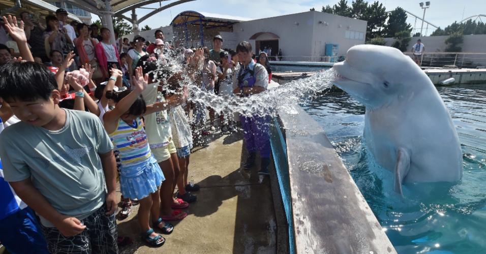 5.ago.2016 - Beluga joga água nos espectadores durante show no parque aquático de Yokohama, no Japão. As temperaturas na cidade passaram dos 30ºC nesta sexta-feira
