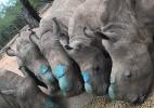 Divulgação/Rhino Revolution