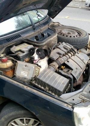 Cachorro conseguiu ficar preso no motor de carro, que enguiçou no meio do caminho
