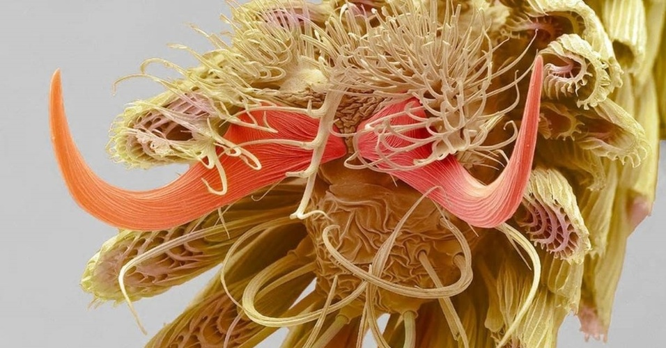 Ampliação dos filamentos presentes na ponta da pata de um mosquito