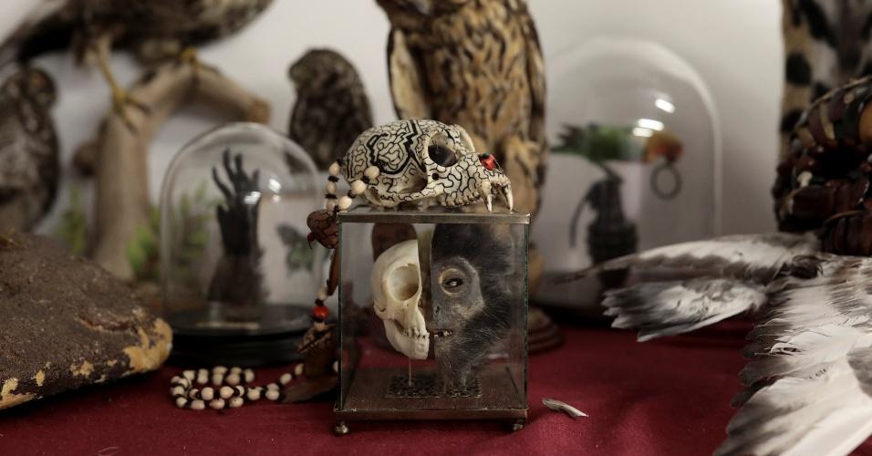 28.dez.2017 - Espécies ameaçadas de extinção empalhadas, esculturas de marfim e medicamentos à base de ervas estão entre os itens apreendidos pela polícia no aeroporto de Heathrow, em Londres