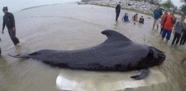 Animal ingeriu cerca de oito quilos de plástico –depois, não conseguiu mais se alimentar