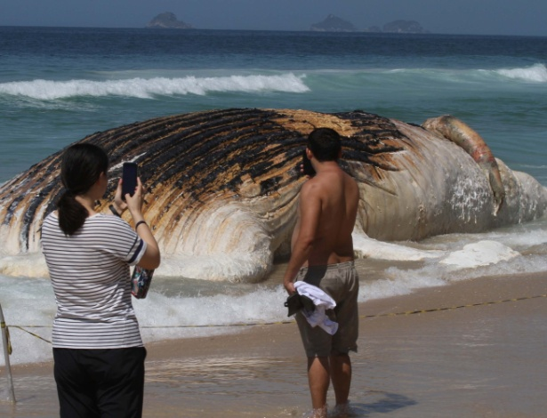 Baleia encalhou na área de arrebentação, em Ipanema, no Rio