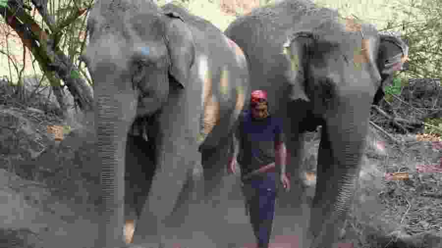 Elefantes estão entre as principais atrações turísticas do país asiático - Alex Johncola