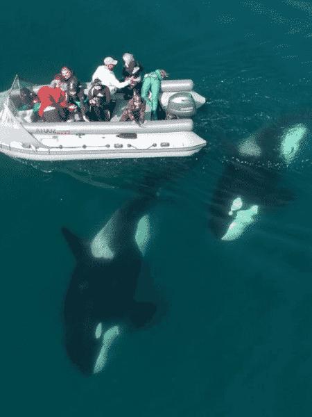 baleias ilha russa - Reprodução/Instagram/@mike_korostelev - Reprodução/Instagram/@mike_korostelev
