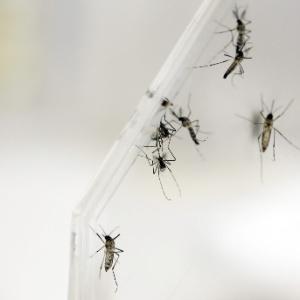 As infecções recentes foram contraídas durante viagens a países da América Latina
