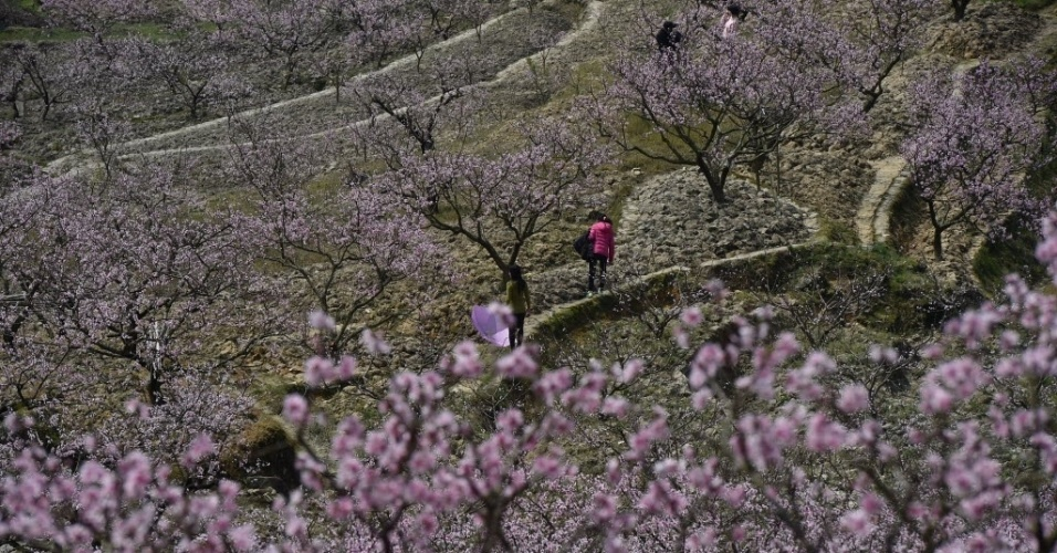 27.mar.2016 - Pessoas caminham observando as flores dos pessegueiros em um festival na cidade de Lantan, na China