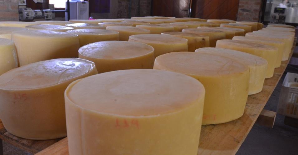 Diariamente, a Fazenda Atalaia fabrica cerca de 250 quilos de queijo de diferentes tipos
