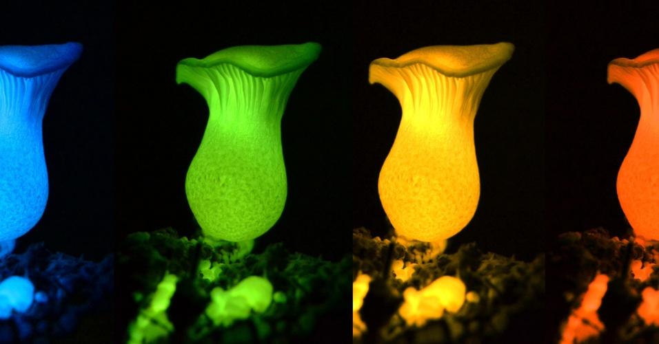 27.abr.2017 - Cogumelo bioluminescente na revista Science