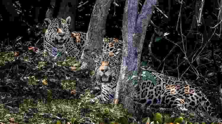 Pantanal está localizado nos estados de Mato Grosso do Sul e Mato Grosso e também nos países Bolívia e Paraguai - Pedro Santiago Amora - Pedro Santiago Amora