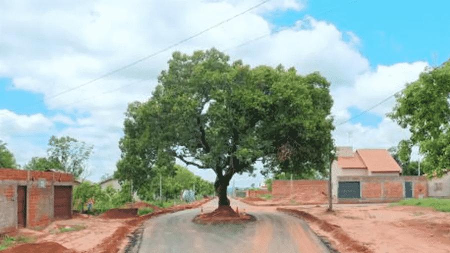 Pé de pequi continuou no meio da rua mesmo após prefeitura de Araguaína asfaltar trecho - Divulgação/Secom