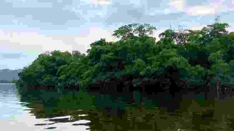 O grupo não sabia que a lagoa é um habitat natural para crocodilos - BBC - BBC