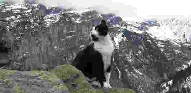 Gatinho virou guia (salvador) de homem que se perdeu nos Alpes suíços - Reprodução/Reddit/sc4s2cg