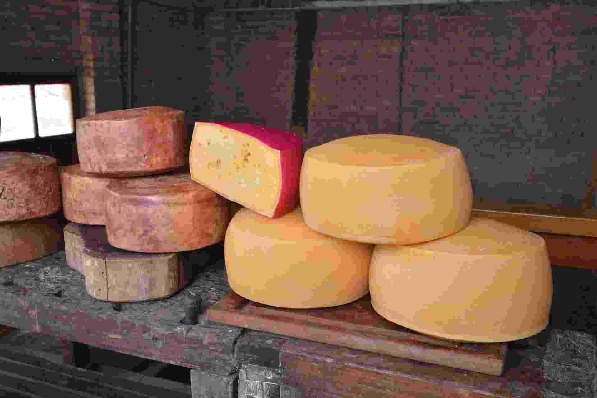O queijo tulha (mais escuro, à esquerda) ganhou medalha de ouro na 29ª edição do World Cheese Awards, em San Sebastian, na Espanha - Arquivo pessoal
