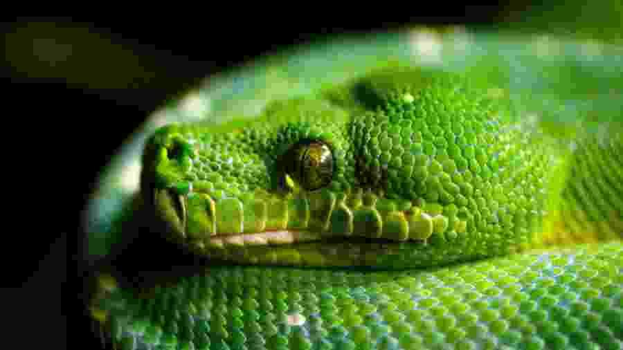 Imagem ilustrativa de serpente verde - Marka/Universal Images Group via Getty Images