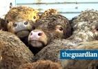 Reprodução/Animals International