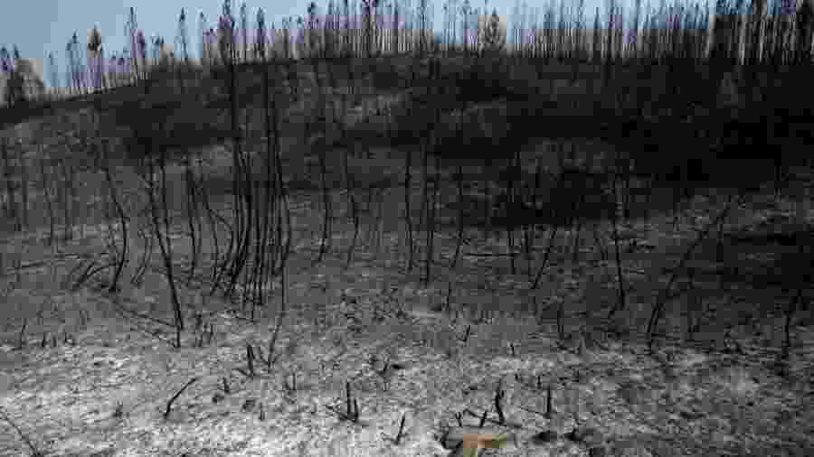 Árvores queimadas em incêndio florestal em Cardigos, em Portugal - Rafael Marchante/Reuters