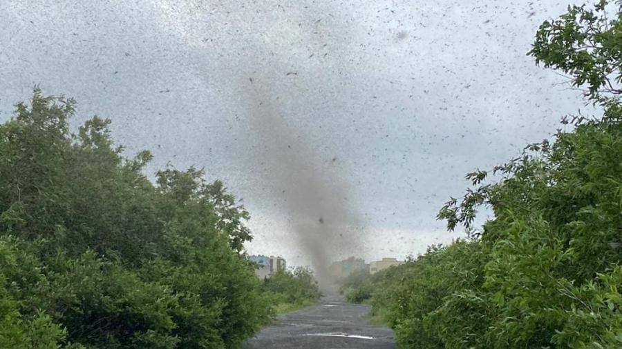 Alexei registrou o momento em que as nuvens de mosquito se juntaram, formando um tornado - Reprodução/The Siberian Times