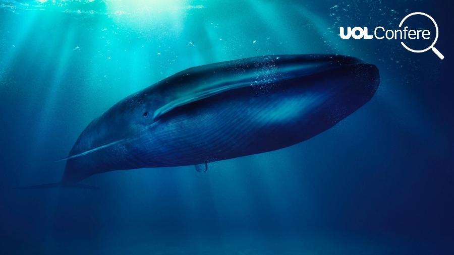 Imagem que circula pelas redes sociais, associada ao desafio da Baleia Azul - Arte/UOL
