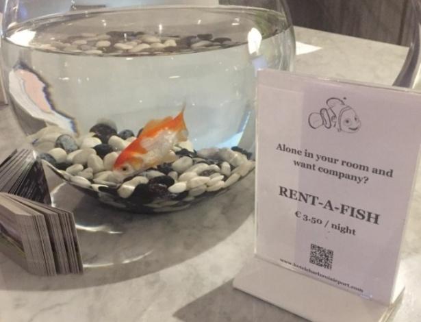 Os hóspedes do hotel podem alugar o peixinho por 3,50 euros (cerca de R$ 13)