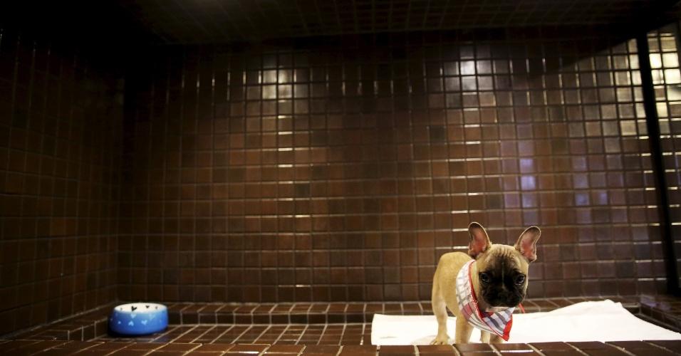 """27.fev.2016 - E o preço desse buldogue francês? Nesse pet shop de luxo, você consegue levar essa fofurinha para casa por uma ?bagatela? de R$ 5.500. A loja voltada para os """"glamudogs"""" fica no shopping Cidade Jardim, em São Paulo"""