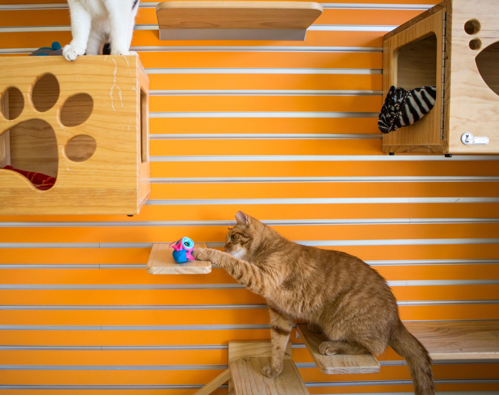 25.07.2016 - Uma maneira mais saudável de alimentar seu gato: esconda suas refeições