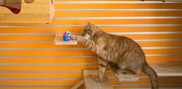 O gato Henrique já é adepto da nova tigela NoBowl  - Jessica Kourkounis/The New York Times