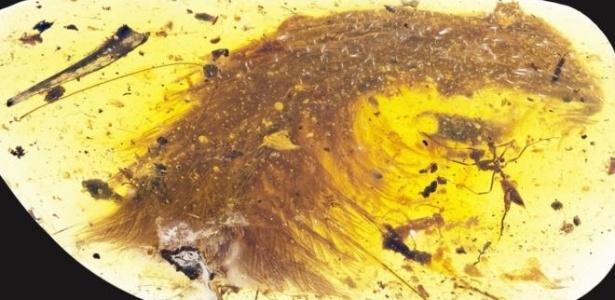 Penas da cauda de dinossauro foram encontradas preservadas em âmbar em Myanmar