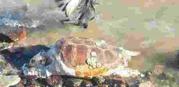 Uma nona tartaruga-verde é encontrada morta já em decomposição em Búzios - Bebeto Karolla/Folha de Búzios - Bebeto Karolla/Folha de Búzios