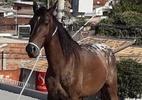 Cavalos sobem em telhado de imóveis em SP; guindaste é usado para o resgate - J. Serafim Show