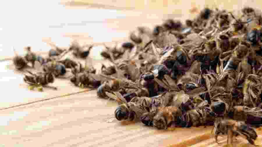 Agrotóxico matou 50 milhões de abelhas em Santa Catarina em um só mês - Getty Images