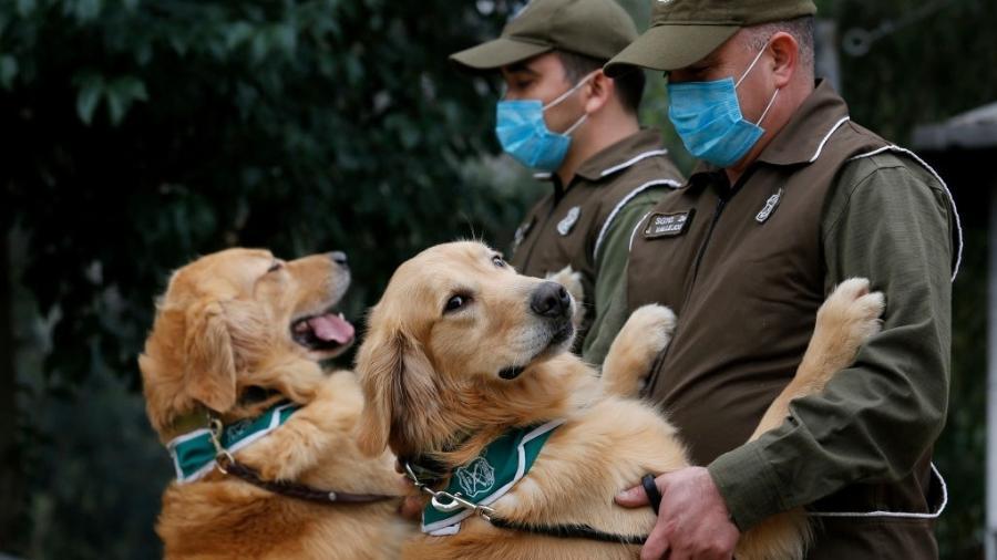Por conta de sua capacidade olfativa, os cães seriam capazes de identificar infectados logo nos estágios iniciais da doença - Marcelo Hernández/Getty Images