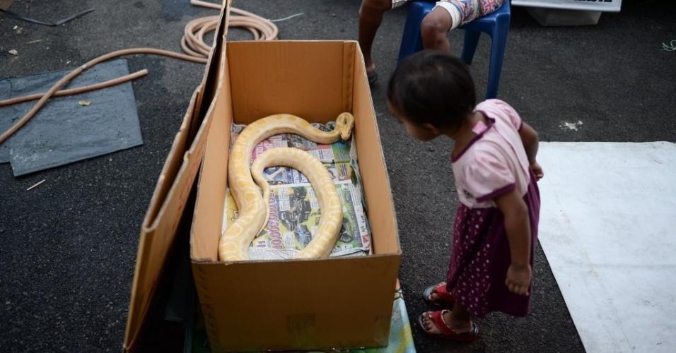26.abr.2016 - Menina observa uma cobra píton à venda em um mercado em Temerloh, na Malásia