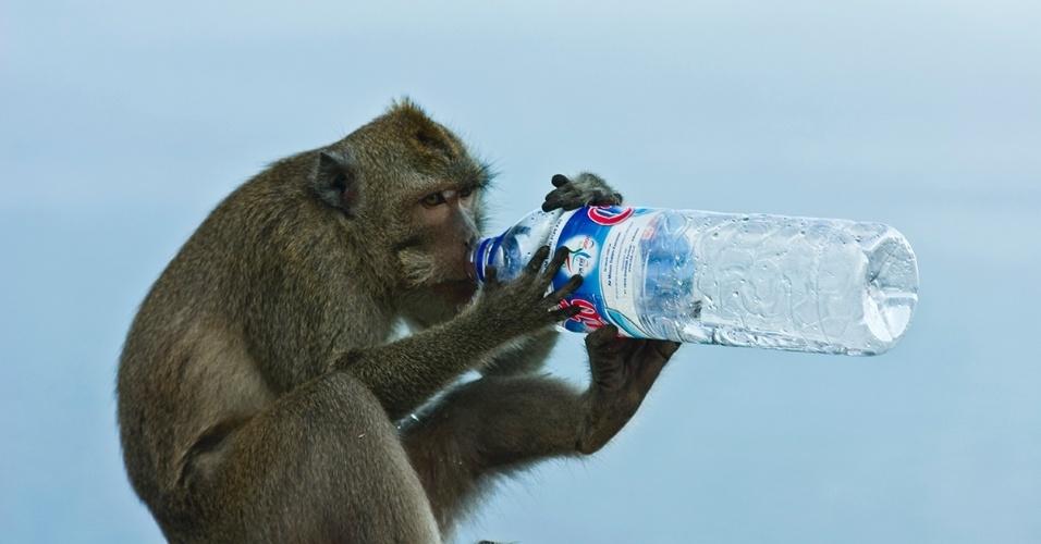 29.jun.2016  - Um macaco em Bali hidrata-se com com uma garrafa de água encontrada. Entretanto, a poluição na Indonésia causa mais problemas de saúde do que acidentes felizes