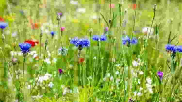 A luz extra de sol a cada semana é a razão pela qual a primavera é conhecida como a estação das flores - GETTY IMAGES - GETTY IMAGES